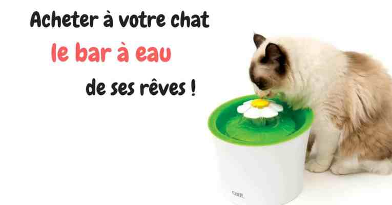 Fontaine-à-eau-pour-chat