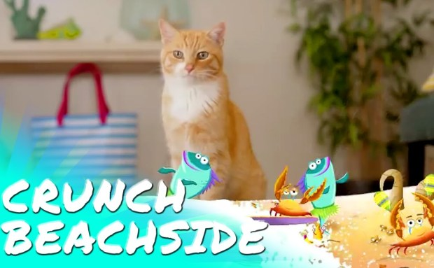 Beachside | Friskies Party Mix Commercial Song