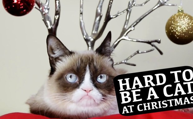 Hard to Be a Cat at Christmas | Friskies Commercial Song