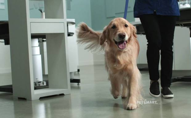 Baby, They're Worth It! | PetSmart Commercial Song