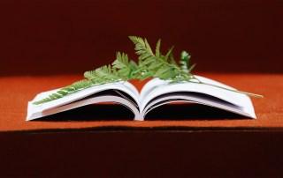 Blatt auf Buch das Unterschied zwischen lernen und sich entwickeln