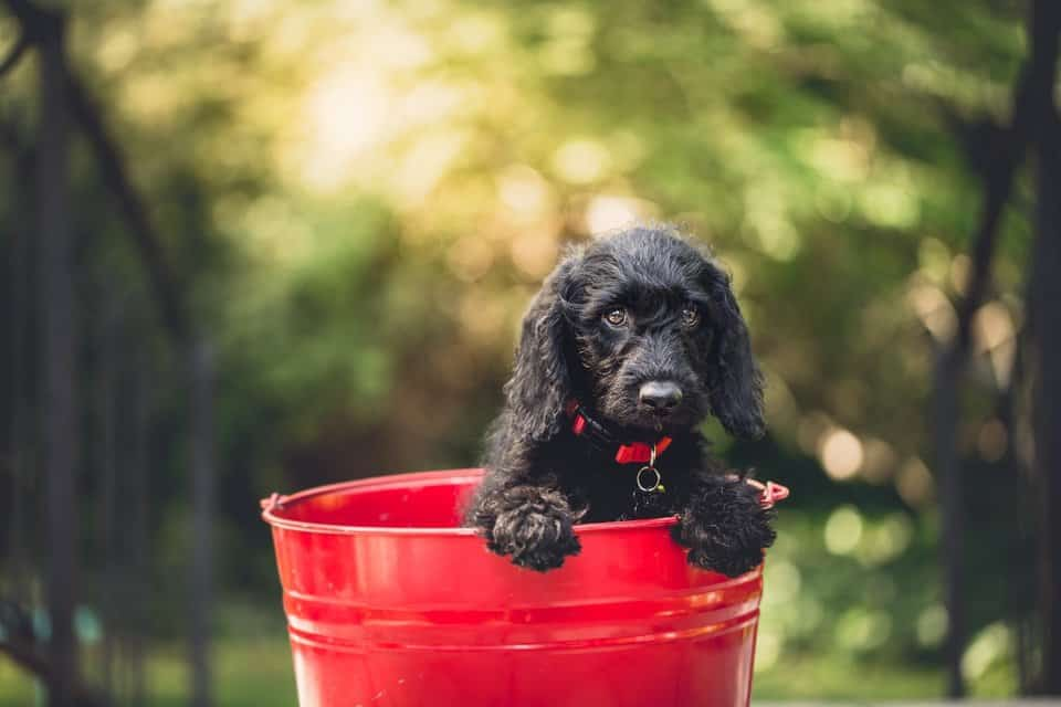 dog_in_bucket