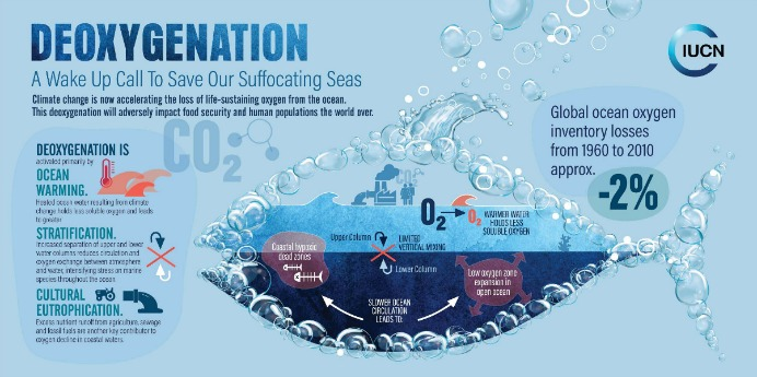 Infographic on deoxygenation from IUCN