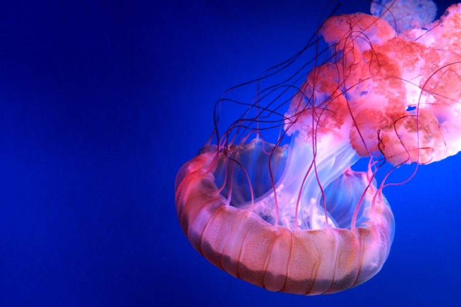 What should you do if you're stung by a jellyfish?