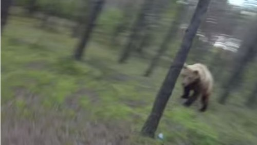 Bear Chases Mountain Biker