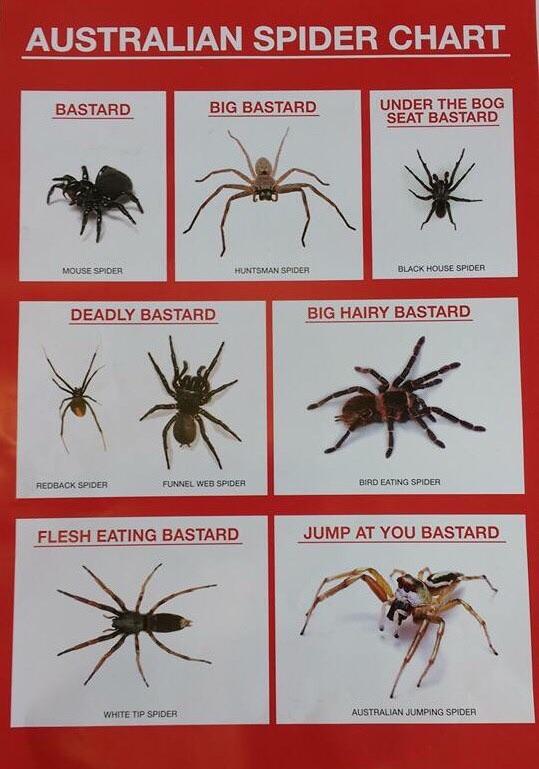 Australian Spider Chart