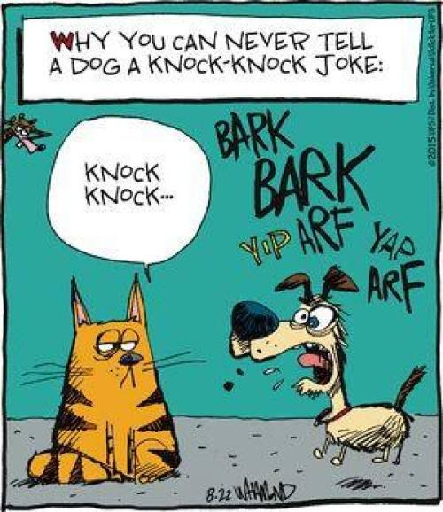 Dog Knock Knock