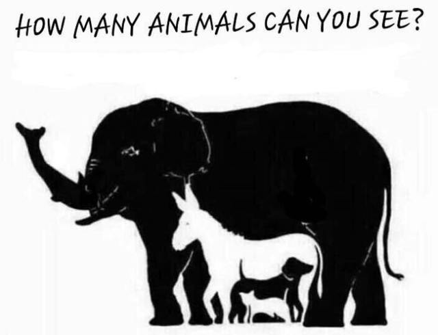 How Many Animals