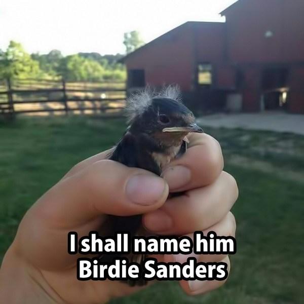 Birdie-Sanders_small