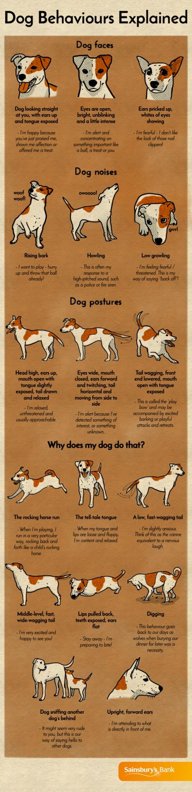 dog-behaviors-explained