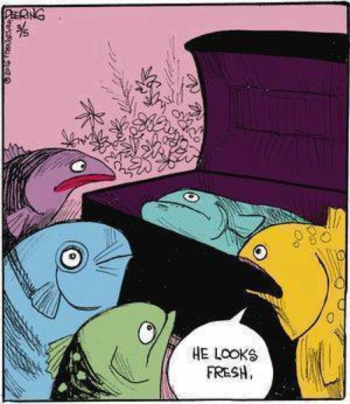 Cartoon Of The Day: A Fish Viewing