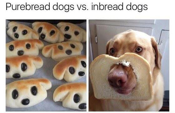 Purebread vs. Inbread