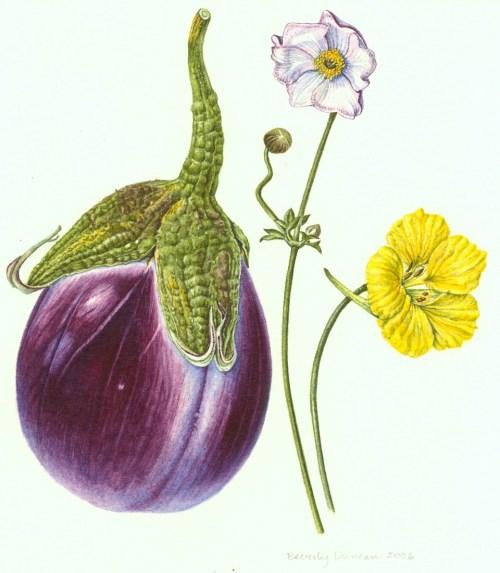 Eggplant, Japanese anemone and nastursium