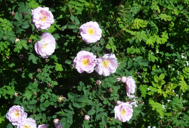 6-15-14 Purington pink