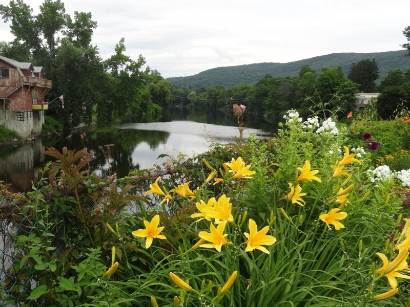 Daylilies July 19