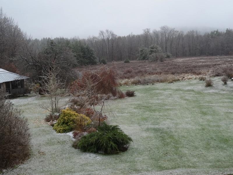Ice on November 17