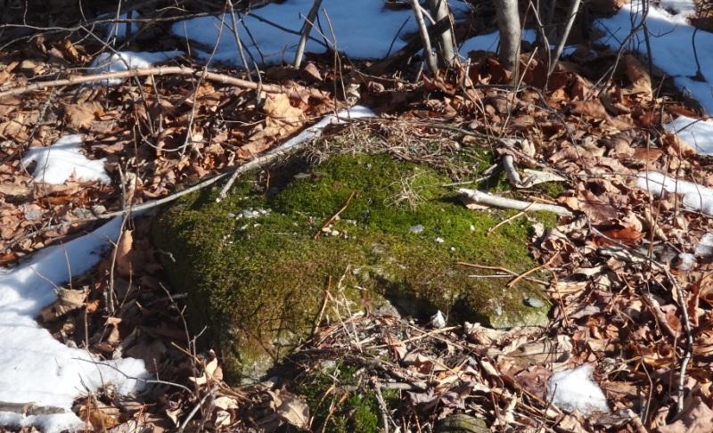 Moss on the roadside