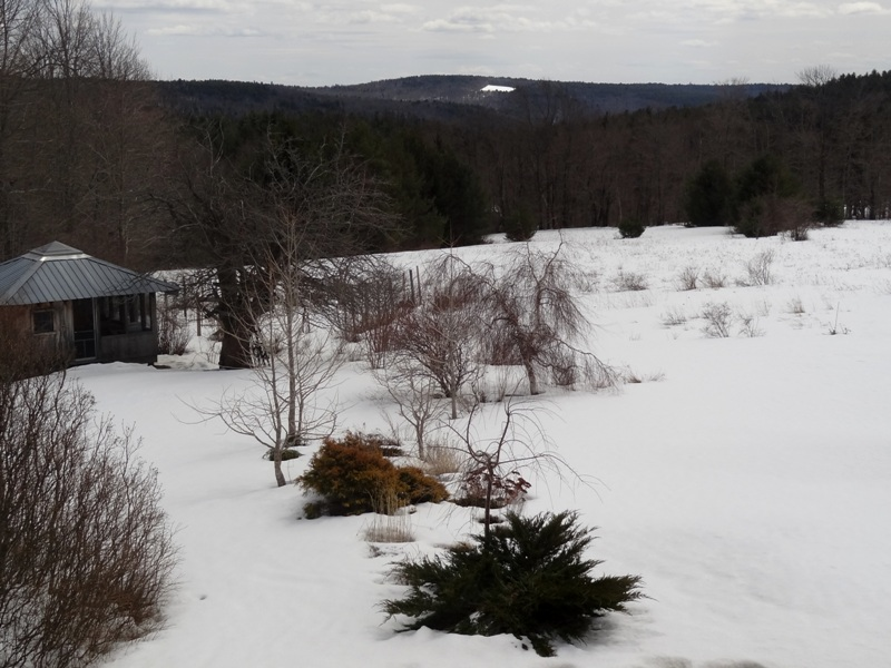 View from the Bedroom Window  March 31, 2015