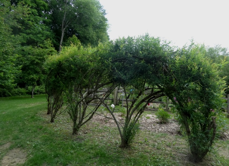 Woven Willow Hedge