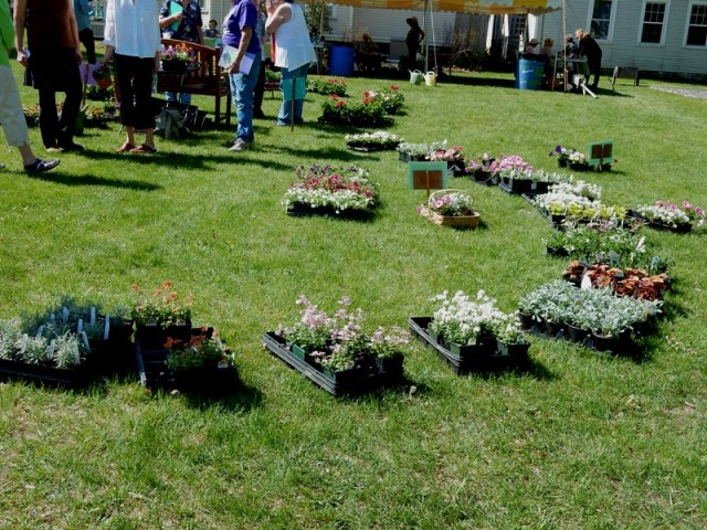 Bridge of Flowers set up for annuals