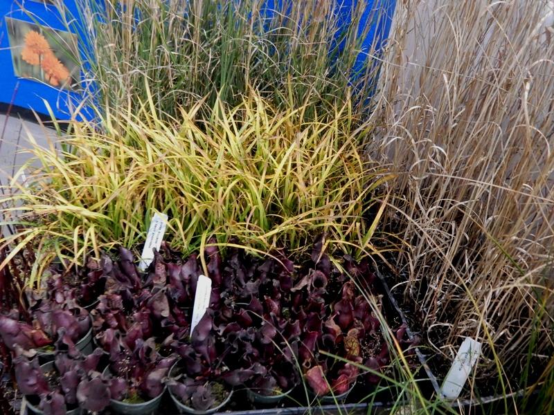 Native Wetland plants at Aquascapes Unlimited