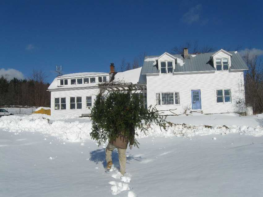 Henry and our freshly cut Christmas tree in 2009