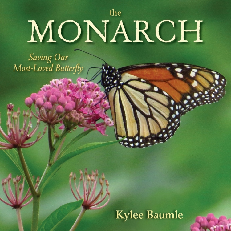 Monarch by Kylee Baumle