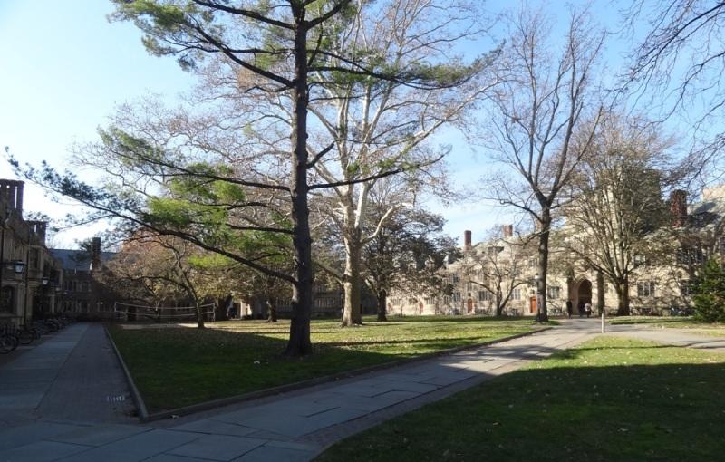 Trees at Princeton U.