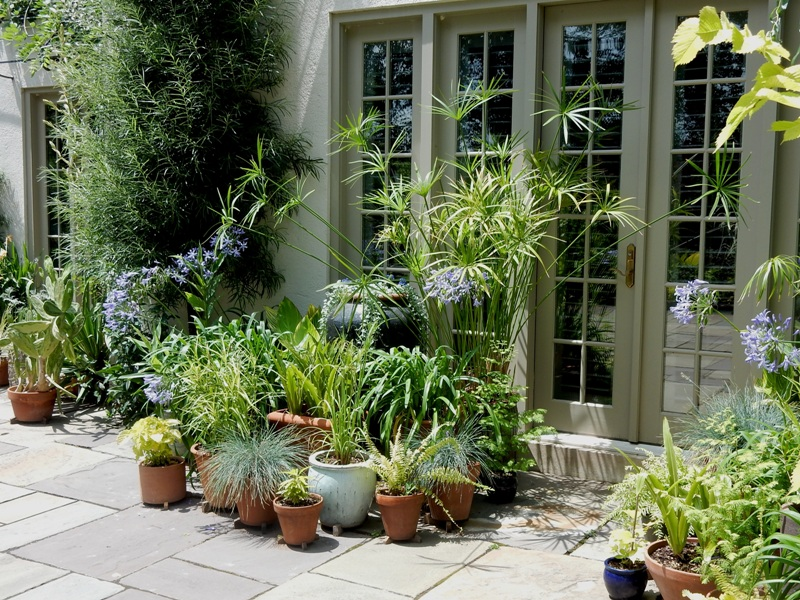 Potted plants on Chanticleer patio
