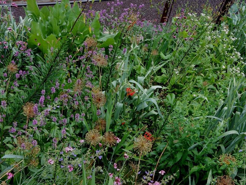 Chanticleer wildflower hillside