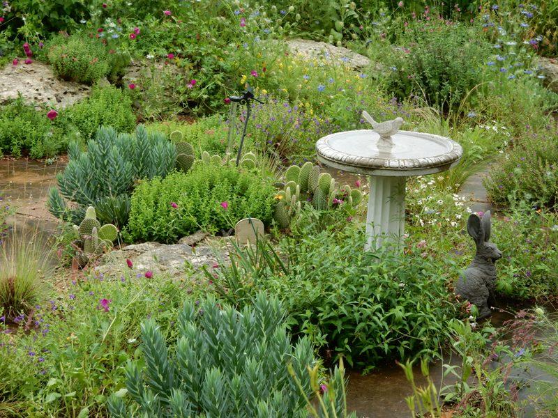 English garden in Austin, Texas