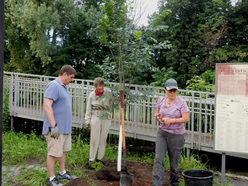 Planting trees at the Energy Park