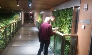 living wall plants