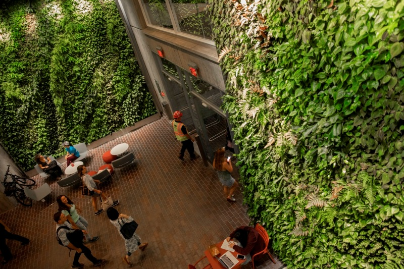 Living Walls Harvard University