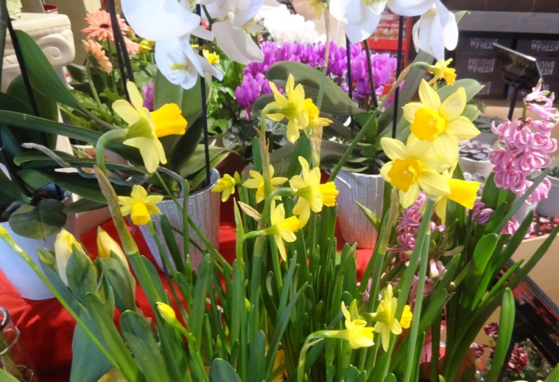 Daffodils at the supermarket