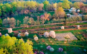 South Orchard at Monticello