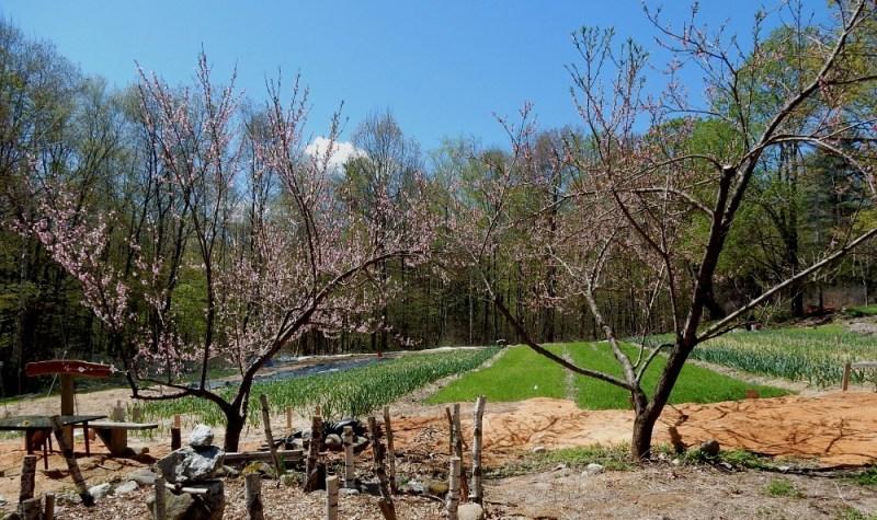Seeds of Solidarity Farm