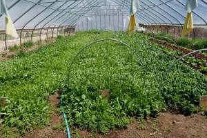 Greenhouses use cardboard too