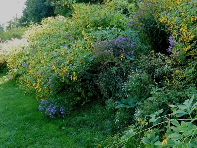 GCC Wildflower meadow