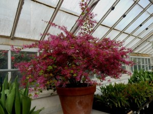 Plants from around the world including Chinese Witch hazel