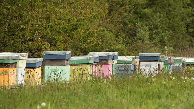 Beehives in a field