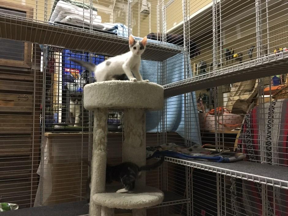 Safe, inexpensive cat enclosure