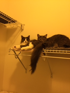 In their new home, Willow and Simon found a safe spot in the closet high on a shelf.
