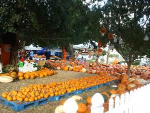 Halloween Music Festival Florida