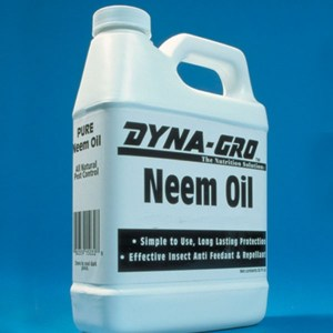 Pinpricks of a Busy Bee: Neem Oil