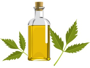 Pinpricks of a Busy Bee: Benefits of Neem Oil