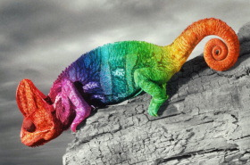 come-fa-il-camaleonte-a-cambiare-colore