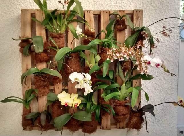 Como cultivar orquídeas em paletes?