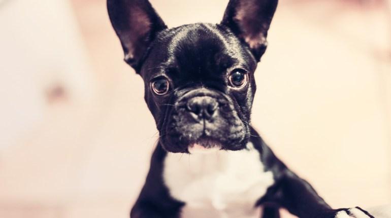 alojamientos que permiten mascotas