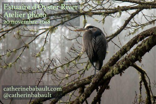 Atelier Photo à l'estuaire d'Oyster River